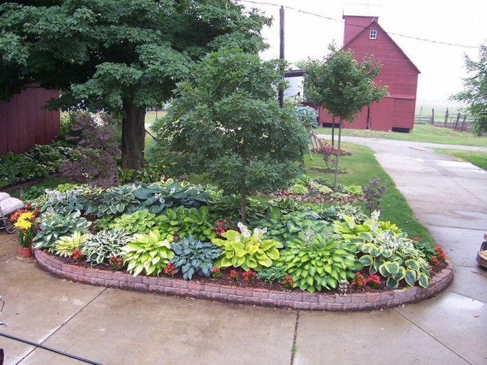 Hostas goetz landscaping How to landscape